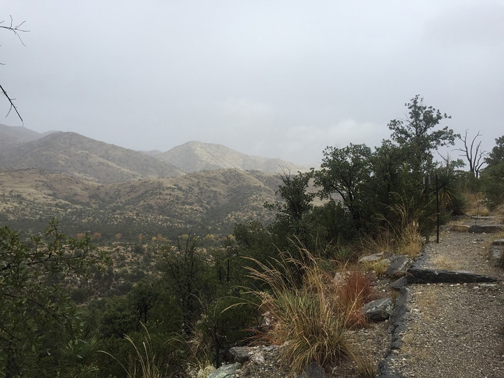 Rain drizzles as we descend the trail into the lower foothills of the eastern Rincon Mountains near Miller Flat.
